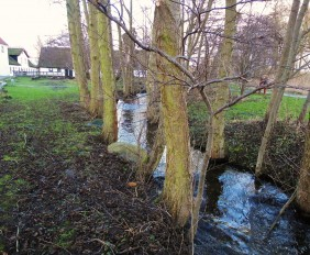 Etableringen af et omløb ved Esrum Møllegård har skabt rigtig gode gydeforhold for åens ørreder