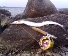 hornfisk