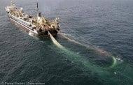 Global fiskeriovervågning