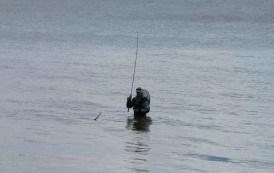 Hornfisk på stangen