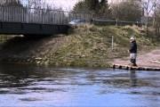 Fluefiskeri / Fluekast ved Odense Å
