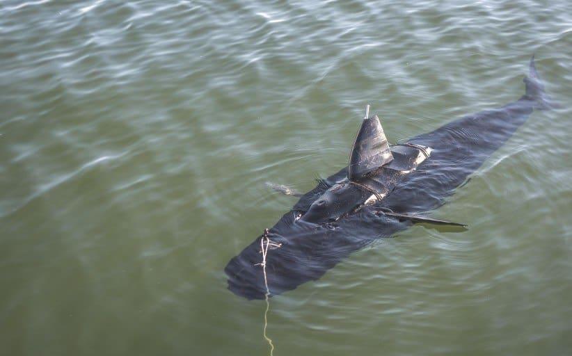 Den der sjove haj er i virkeligheden en tunfisk, som er en undersøisk amerikansk spion