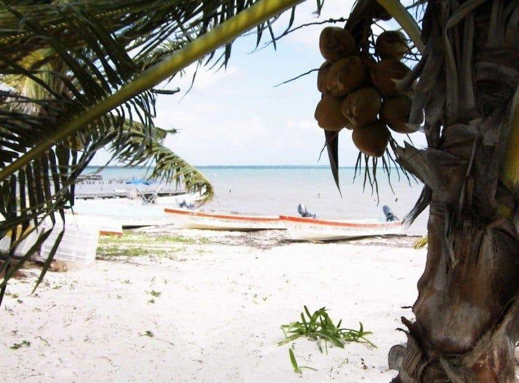 Kokosnødder findes i rå mængder