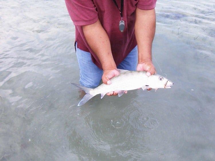 De små bonefish var på omkring et kilo