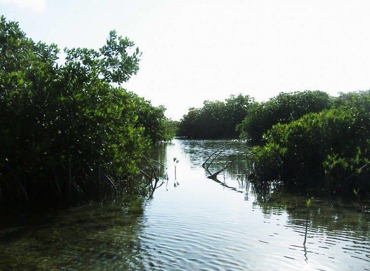 Kanalerne i mangroven virkede endeløse