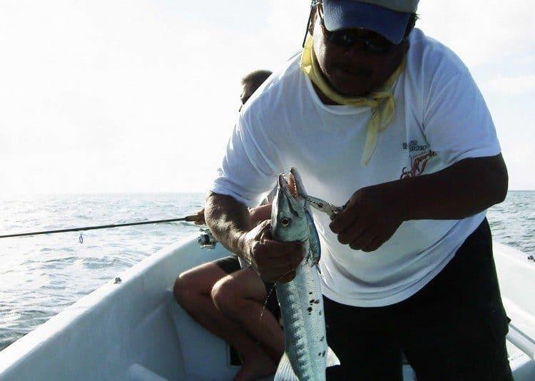 Min guide, Pedro, afkroger en lille barracuda, som har taget en blå Bomber-wobbler, som jeg gav til ham, da vi rejste hjem. Fisken tog han og Manuel med det samme til gryderne derhjemme