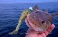 Flere fisk til danske fiskere